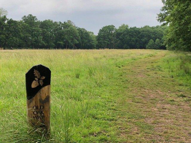 Old Oak Way at Bramshot Country Park