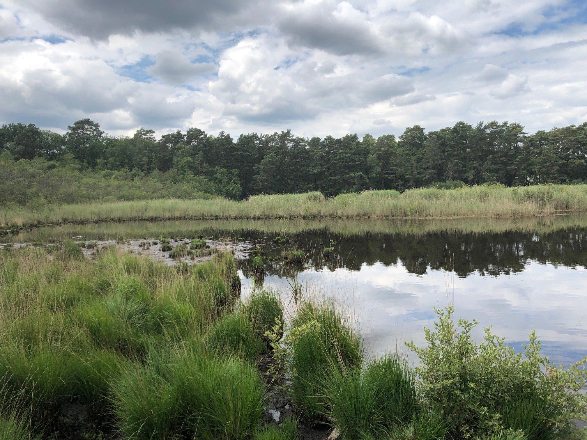 Englemere Pond Nature Reserve Ascot Bracknell Forest