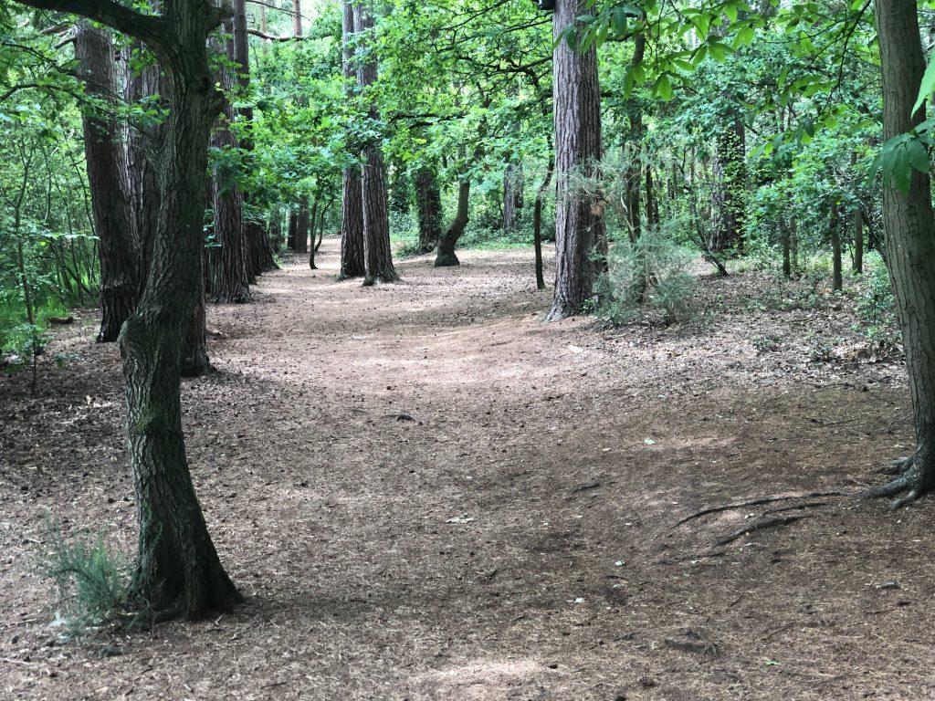 Woodland Path, Ascot