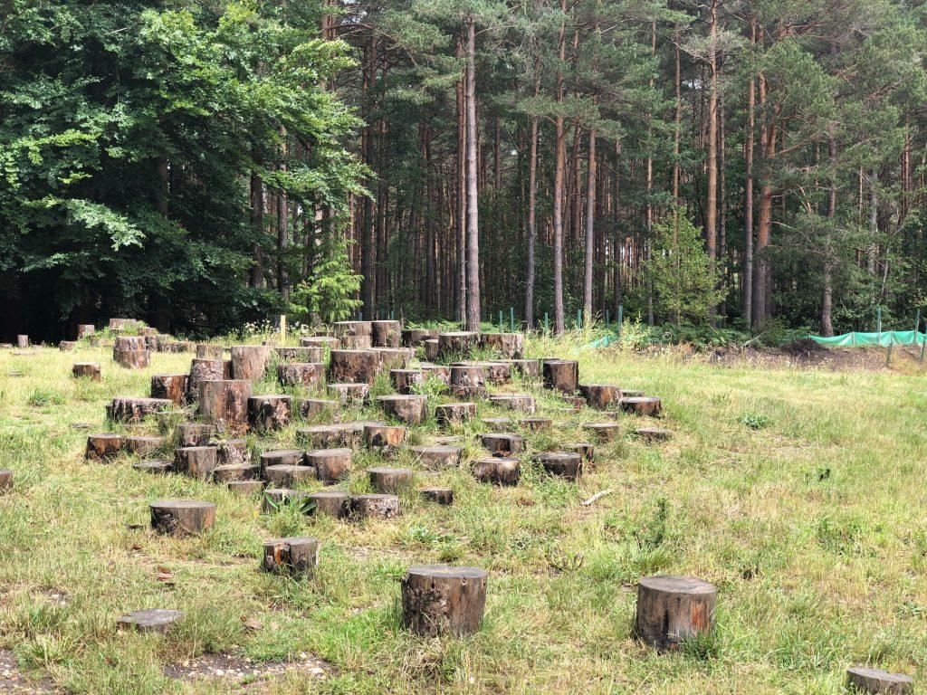 Log pile steps