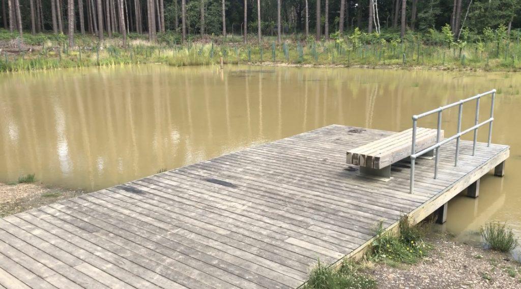 Viewing Platform over Pond