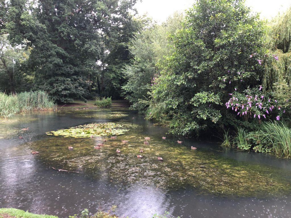 Duck Pond and Feeding the Ducks at Herschel Park, Slough, Berkshire