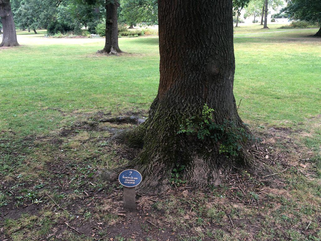 Tree Trail Herschel Park