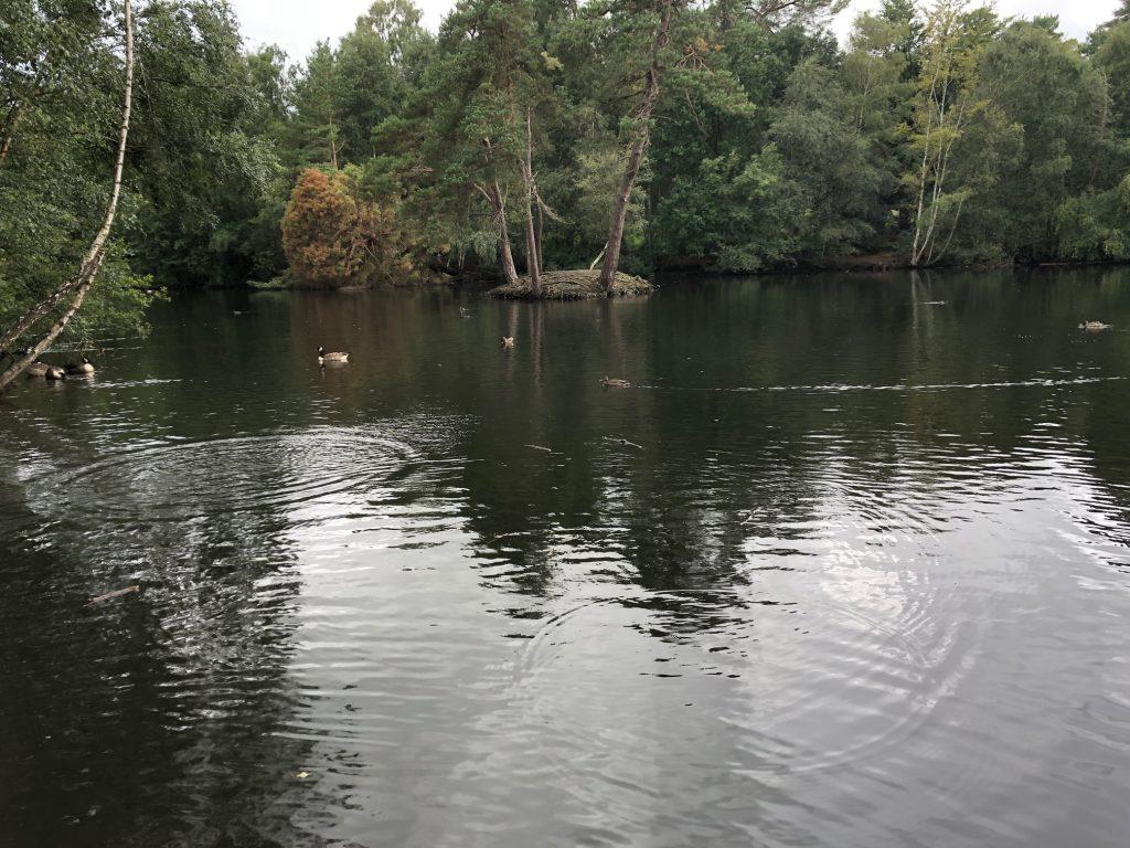 Island on the pond at Simons Wood