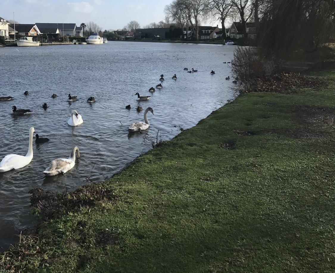 Feeding the Ducks at Runnymede