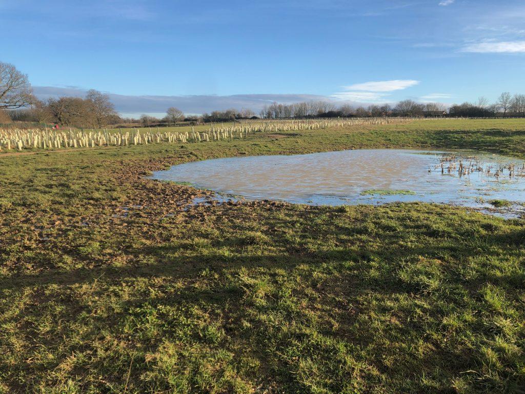 Piglittle Field Pond