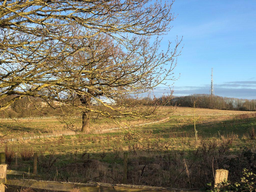 Piglittle Field