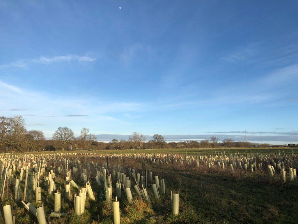 Piglittle Field Tree Saplings