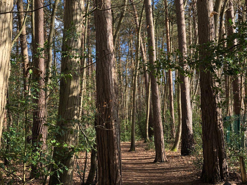 Pinewood Centre Woodland Walk