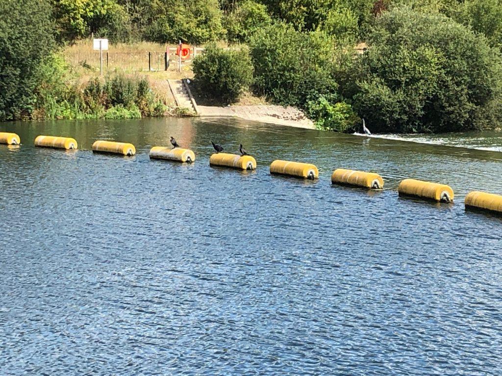 Jubilee River Slough Weir