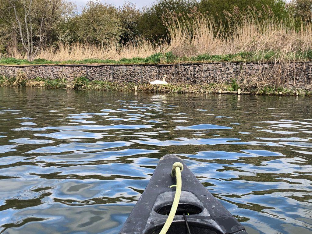 Swan in Nest Canoe and Kayak Adventures
