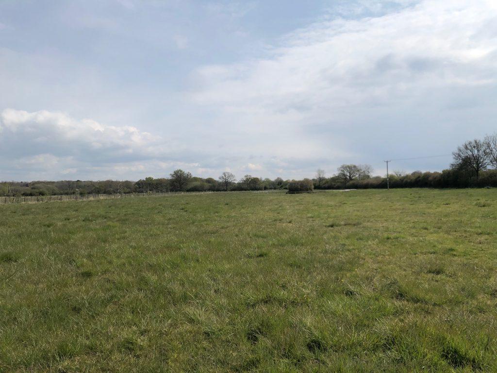 Field at Shurlock Road Nature Reserve