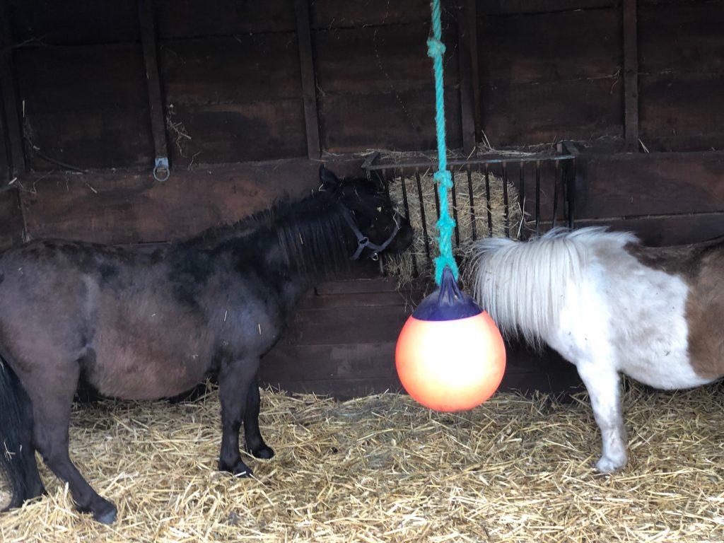 Shetland Ponies Jakes PlayWorld Sandhurst