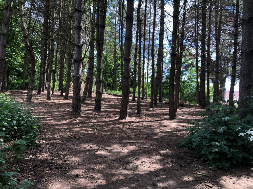 Woodland Jenette's Hill