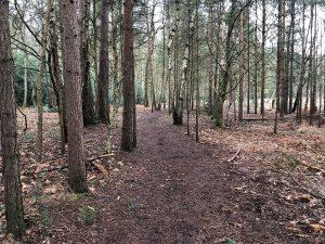 Walking at Wildmoor Heath Nature Reserve, Crowthorne