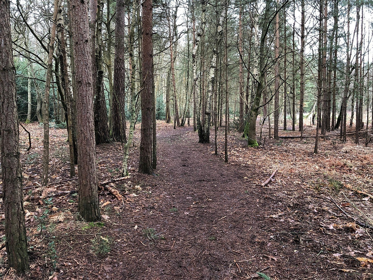 Walking at Wildmoor Heath Nature Reserve, Crowthorne