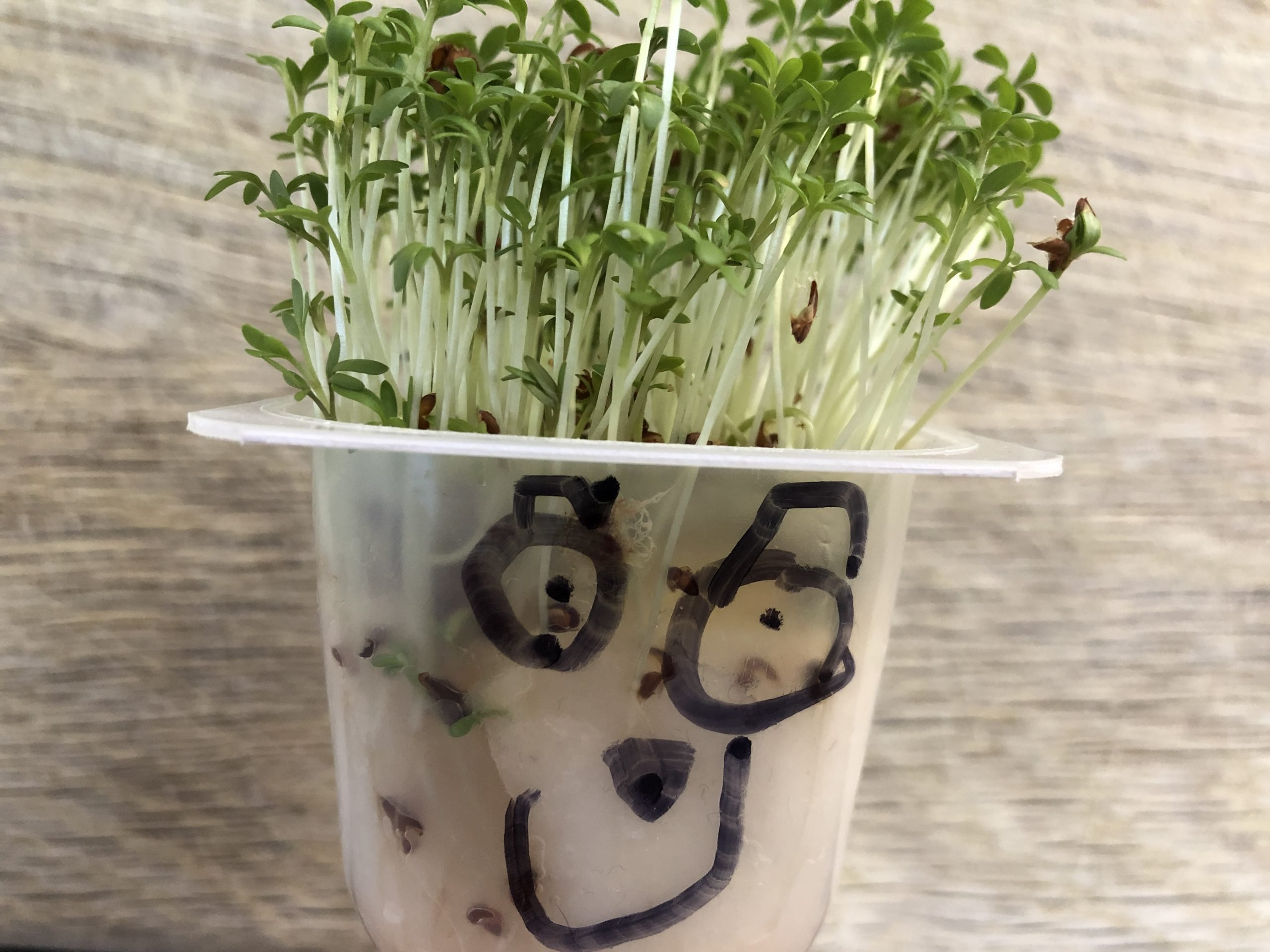 Making a Cress Head