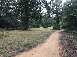 A walk at Pope's Meadow in Binfield
