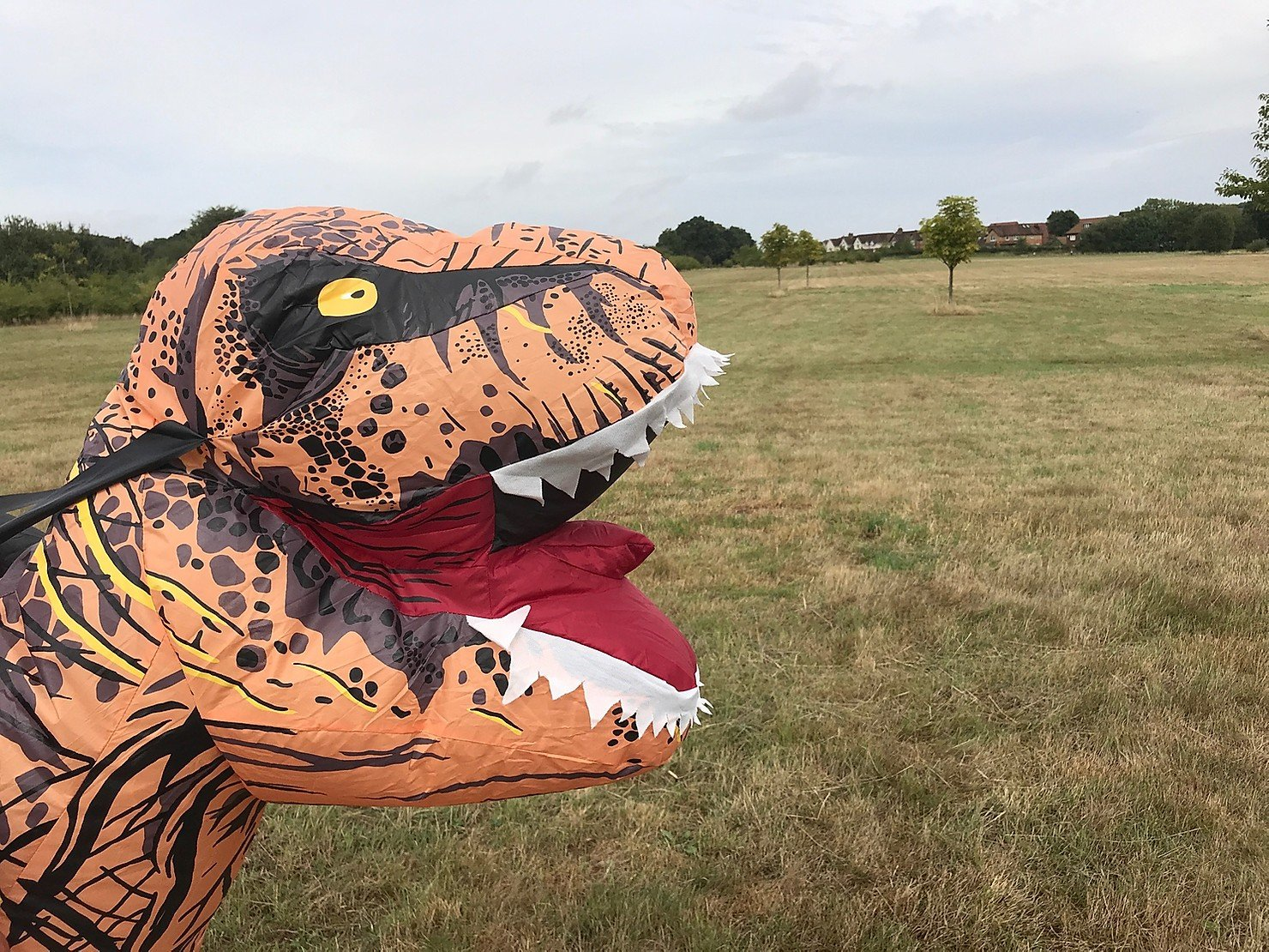 Dinosaur Trail at Peacocks Meadow, Bracknell (trail now finished)