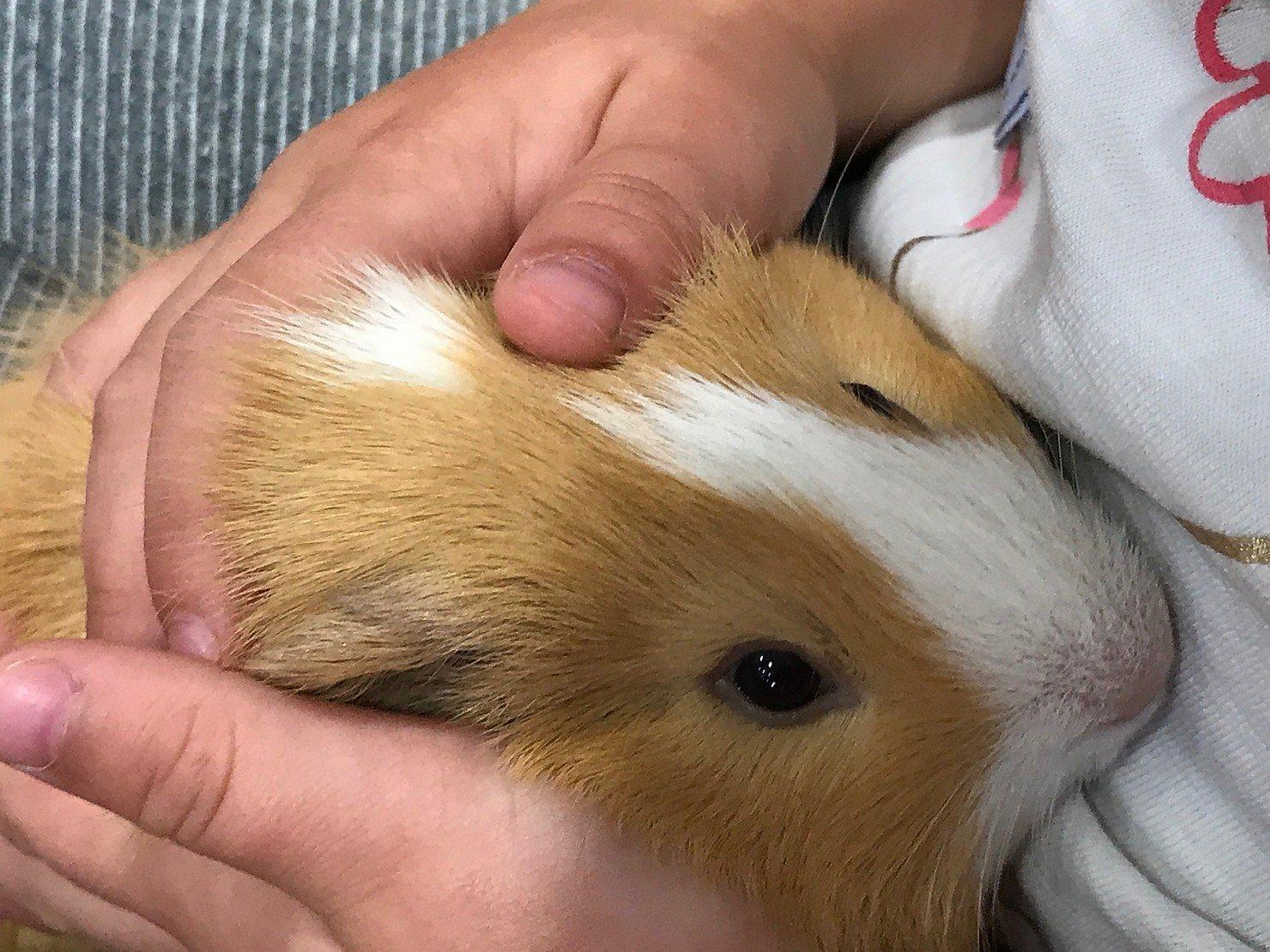 Pets at Home Workshop