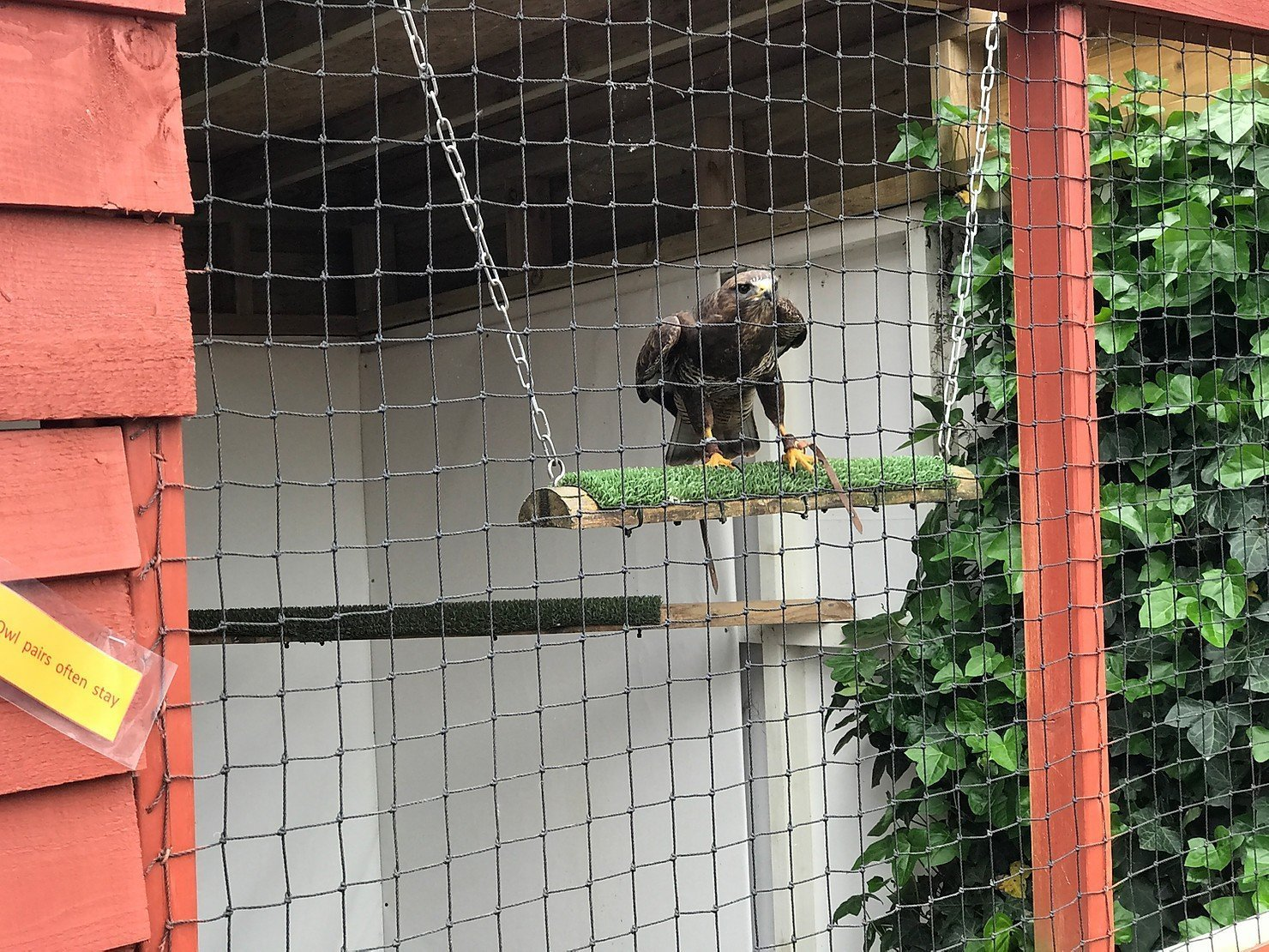 'Spring Fever' Open Day at Feathers and Fur Falconry Centre