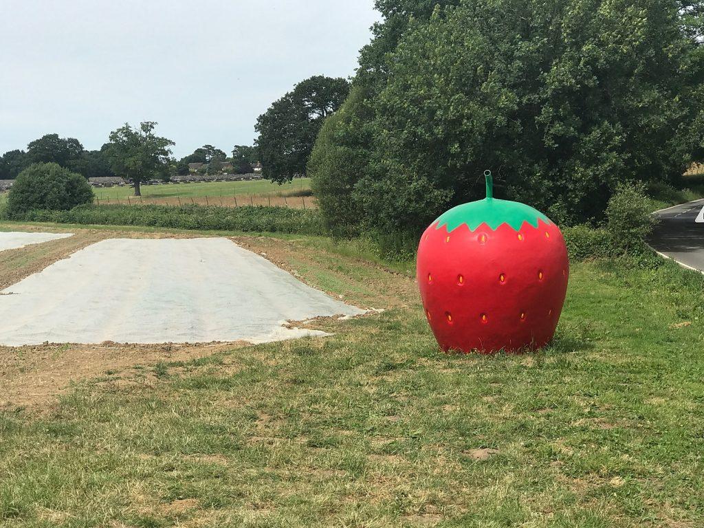 Giant Strawberry at Grays Farm, Wokingham