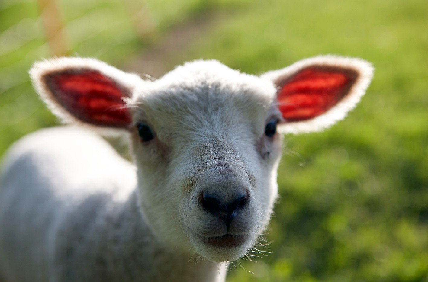 Lambing Season 2018