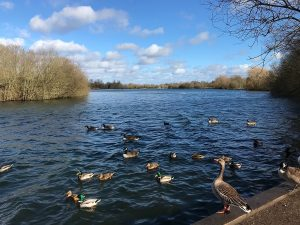 A family trip to Dinton Pastures Country Park