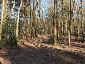 Exploring Lightwater Country Park