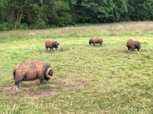 Walking at Bramshot Farm Country Park, Fleet