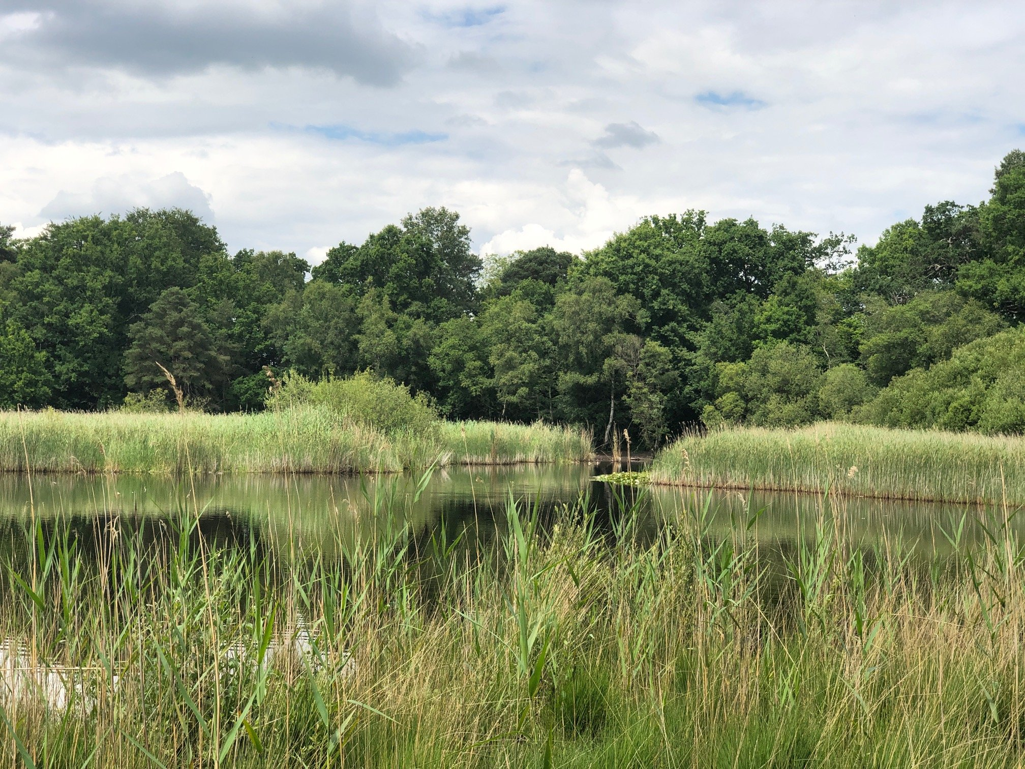 Walking at Englemere Pond Nature Reserve, Ascot, Berkshire