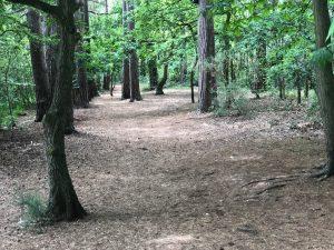 Woodland Walks in Berkshire