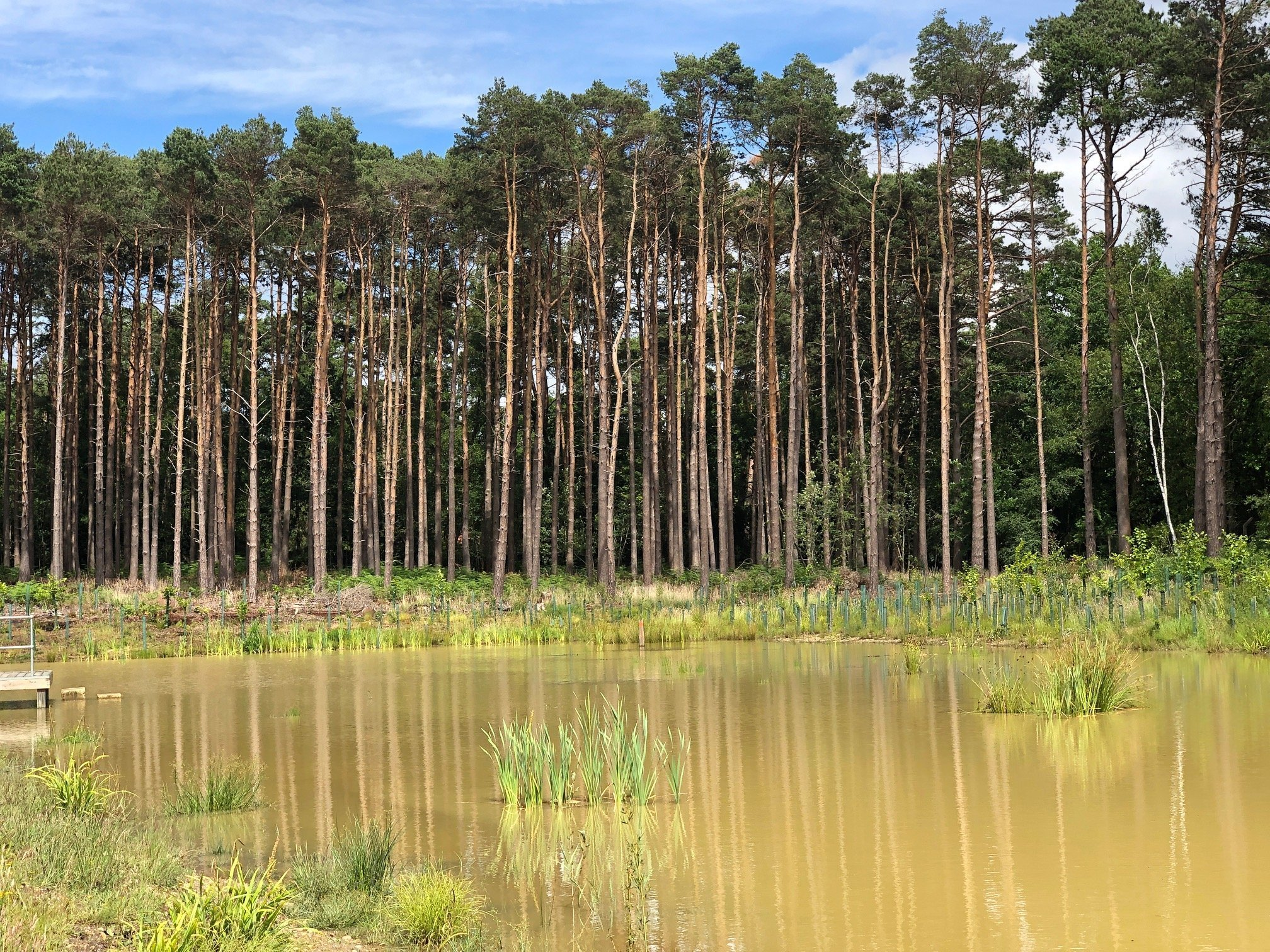 Walking at Buckler's Forest, Crowthorne