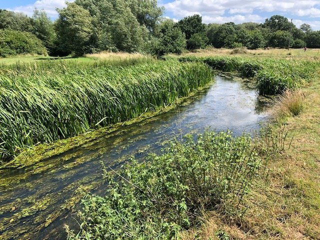 Walking at Shepherd Meadows and River Blackwater, Sandhurst