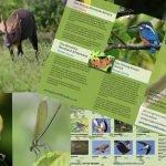Goring Gap Wildlife Walks