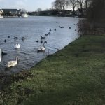 Feeding the Ducks at Runnymede