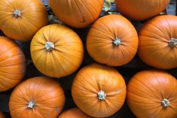 Pick Your Own Pumpkin