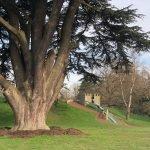 The Hedgehog Park in Leppington