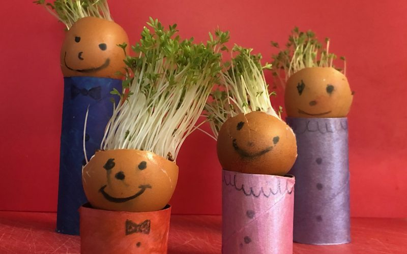 Cress Egg Head People