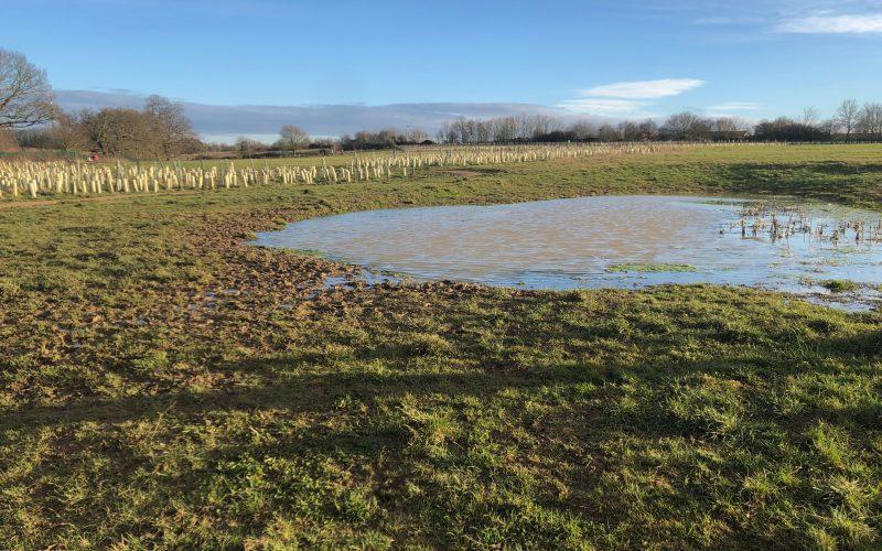 Walking at Piglittle Field in Binfield