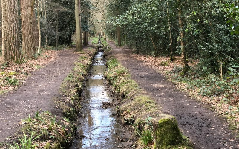 Woodland Walk at the Pinewood Centre